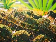 Belle mousse verte dans le sunglight images stock