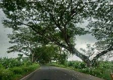 Belle nature avec le temps impressionnant photos libres de droits