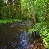 Belle nature avec une rivière des roches et fond coloré extérieur de forêt avec de l'eau Image libre de droits