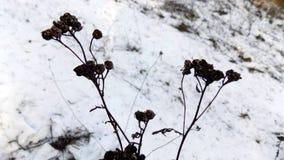 Belle nature Beau fond de l'hiver Paysage de nature d'hiver Zone verte Images libres de droits