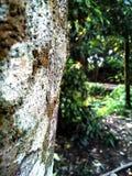 Belle nature d'arbres Image libre de droits