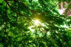 Belle nature dans le matin photos stock