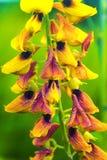 Belle nature de bokeh jaune de fleur Images libres de droits