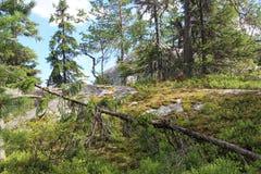 Belle nature de la Finlande, Koli Image libre de droits