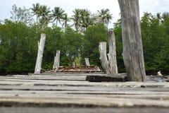 Belle nature de vue en bois de jetée d'abandon, forêt de palétuvier Images libres de droits