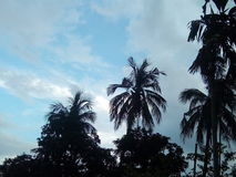 Belle nature indienne dans l'après-midi Images stock