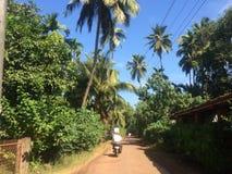 Belle nature, Kokan, arbres, routes de village image stock