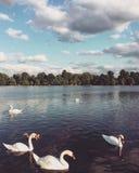 Belle nature Lac avec des cygnes Jardins de Kensington, Londres, Angleterre image stock