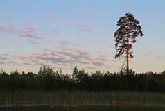 Belle nature - lac de forêt le soir Monde de beauté, Russie photos stock