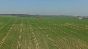 Belle nature, vue aérienne de marche avant banque de vidéos