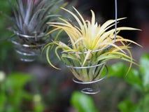 Belle nouvelle petite orchidée Images libres de droits