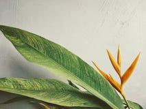 Belle, orange fleur tropicale contre un mur blanc photographie stock libre de droits