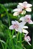 Belle orchidée blanche photo stock