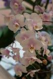 Belle orchidée blanche Image libre de droits