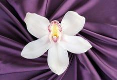Belle orchidée blanche sur le satin pourpré Photographie stock libre de droits