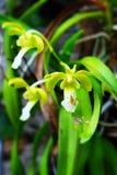 Belle orchidée d'oiseau de jaune de flore de fleurs Image stock