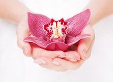 Belle orchidée dans des paumes Images libres de droits