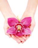 Belle orchidée dans des paumes de womans Image libre de droits
