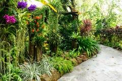Belle orchidée de jardin Image libre de droits