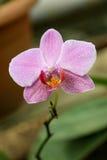 Belle orchidée en nature photos libres de droits
