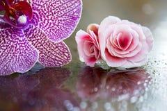 Belle orchidée et fleurs roses Image libre de droits
