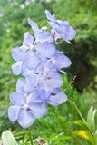 Belle orchidée pourprée Image stock