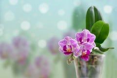 Belle orchidée rose. illustration libre de droits