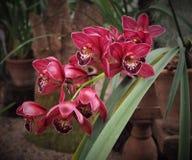 Belle orchidée s'élevant dans une serre Photo stock
