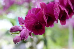Belle orchidée sur le fond brouillé Photo libre de droits