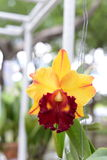Belle orchidée sur le fond brouillé, foyer sélectif Photo libre de droits