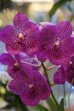 Belle orchidée violette Images libres de droits