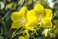 Belle orchidee Fotografia Stock Libera da Diritti