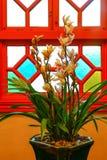 Belle orchidee gialle del cymbidium fotografia stock