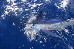 Belle pêche de sport réelle d'aiguille de mer de marlin blanc Images stock