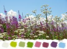 Belle palette de couleurs de wildflowers images stock