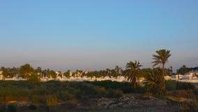 Belle palme e costruzione di verde del paesaggio mentre alba del mornig archivi video