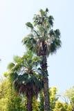 Belle palme ed altri alberi nell'ambito di luce solare Fotografia Stock