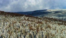 Belle pente de colline avec des arbres d'hiver dans la neige Photographie stock libre de droits
