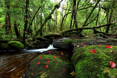 Belle petite cascade dans la forêt tropicale de Chiang Mai, Thaïlande Images libres de droits