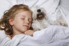 Belle petite fille blonde dormant avec le chiot blanc de schnauzer sur le lit blanc Concept d'amitié Images libres de droits