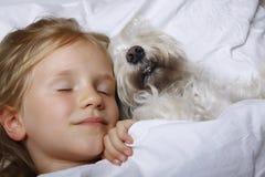 Belle petite fille blonde dormant avec le chiot blanc de schnauzer sur le lit blanc Concept d'amitié Photos libres de droits