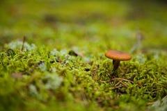 Belle photo d'un champignon Photographie stock