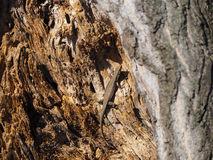 Belle photo de lézard dans l'arbre Photos stock