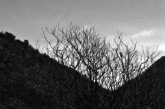 Belle photo noire et blanche de montagne images libres de droits
