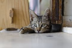 Belle pièce de chats Image libre de droits