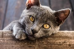Belle pièce de chats Photos libres de droits
