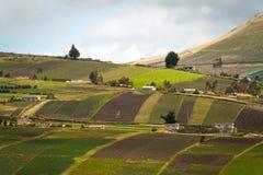 Belle piantagioni del campo del raccolto in Oyacachi Fotografie Stock