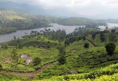 Belle piantagioni di tè sulle banche di un fiume immagini stock libere da diritti