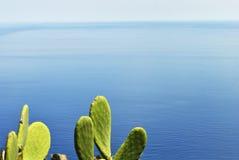Belle piante del cactus con il mar Mediterraneo nel fondo Immagine Stock Libera da Diritti
