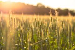 Belle piante in un campo fotografia stock libera da diritti